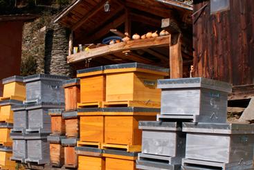 Fabrication de ruches